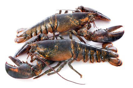 Lobsters and wine image