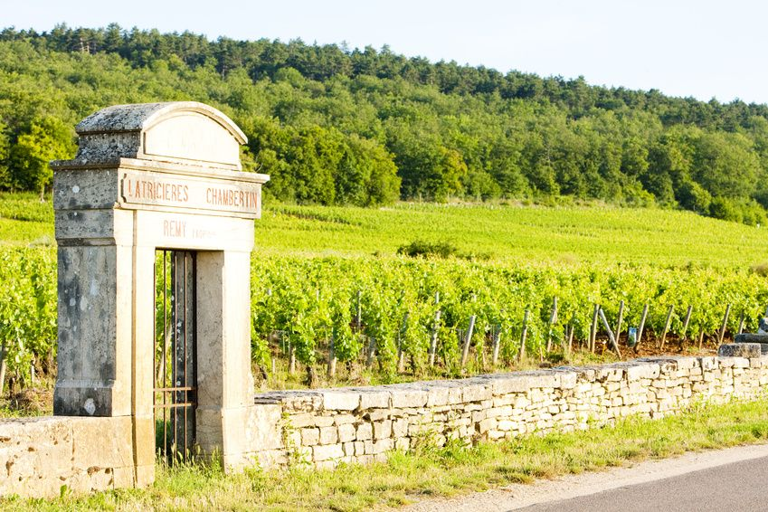 burgundy-vines-vineyard-prices-rise
