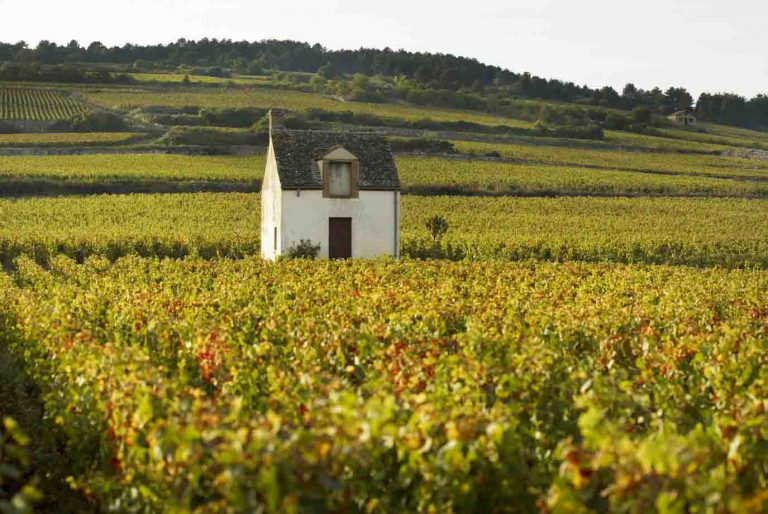 Burgundy Grands Crus