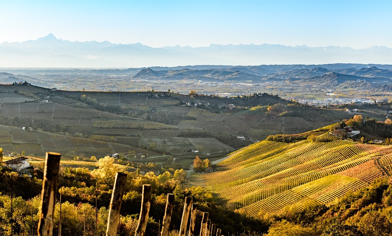 Fixed-price sale: heading south to the vineyards of Italy