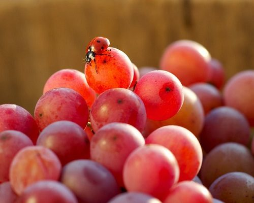 Organic, biodynamic and natural wines represent more than a quarter of sales at iDealwine