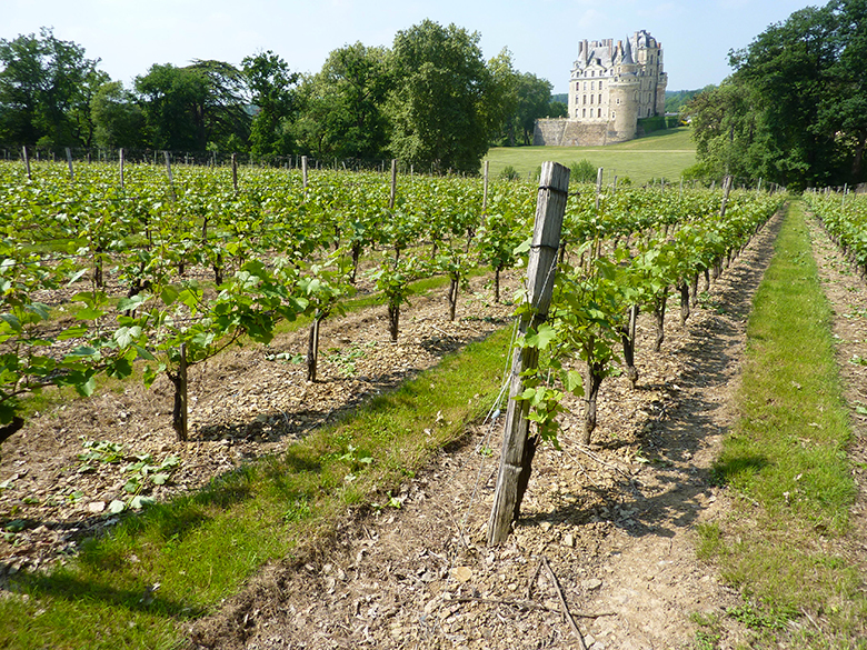 Guide-vins-loire-Touraine Tours wine
