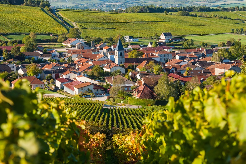 Baroville, Champagne vineyards in the Cote des Bar area of the Aube departm