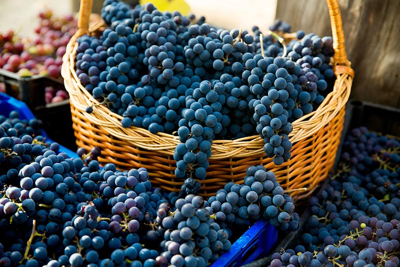grapes defects natural wine