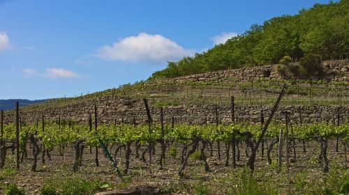 https://www.idealwine.info/domaine-des-vignes-oubliees-vines-brought-back-to-life/